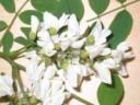 fleurzoom.jpg